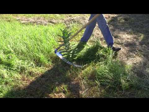 How to Scythe Around Desirable Plants