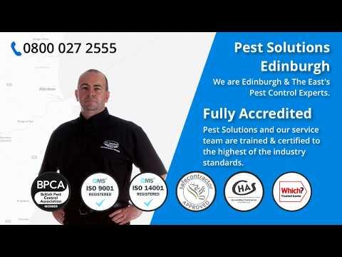 Pest Solutions Edinburgh   Pest Bird Control   BPCA   Pest Control Edinburgh