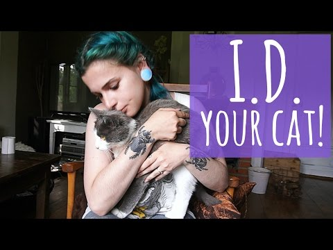 I.D. your cat! || Why collars are important  + custom pet tags?