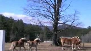 Pony Spring Fling