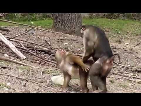 Xxx Mp4 Sex In The Zoo 3gp Sex
