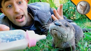Baby Otter Feeding Time!