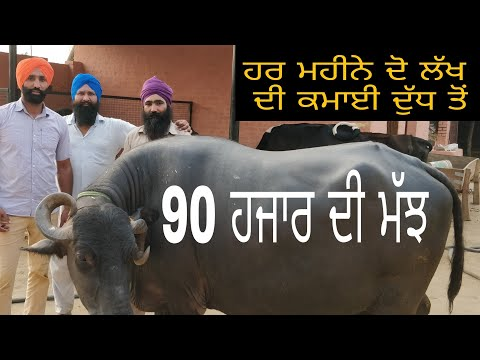 goat milk donate || Dairy farming || hard  works Shinda jaanmahal video