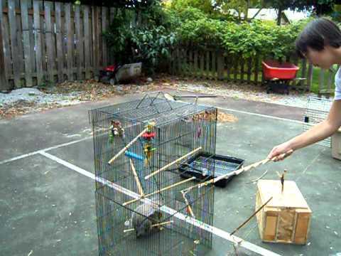 Squirrel in bird cage