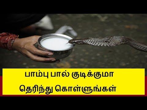 பாம்பு பால் குடிக்குமா தெரிந்து கொள்ளுங்கள் | Snake milk secret in tamil