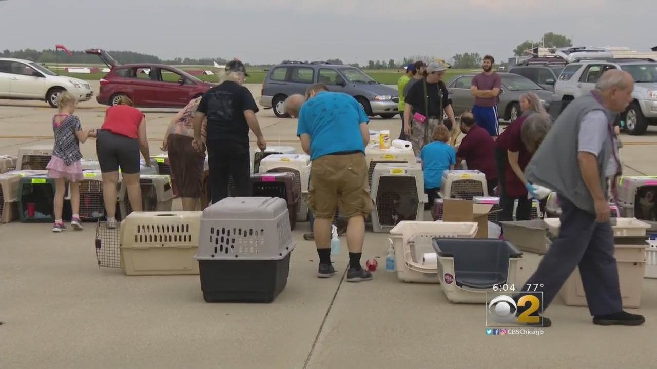 Dogs, Cats From Flooded Houston Shelters Arrive In Waukegan
