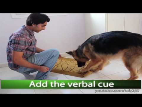Dog Trick Tutorial: