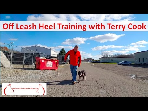Columbus Ohio Dog Training by Terry Cook: Stop your dog from pulling: Crockett Walking Off leash
