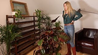 LOW LIGHT PLANTS FOR WINDOWLESS ROOMS