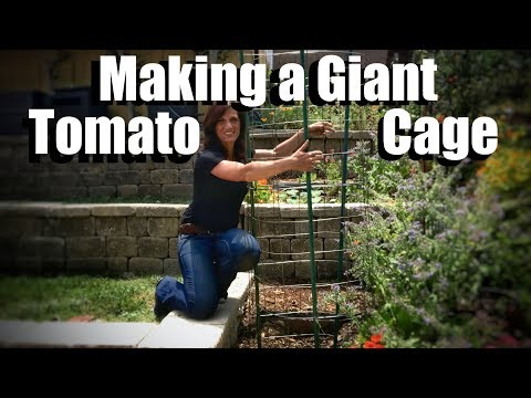 Grow Large Tomatoes: How to Make a Giant Tomato Cage & Plant a Tomato//Beefsteak Tomato Challenge #4