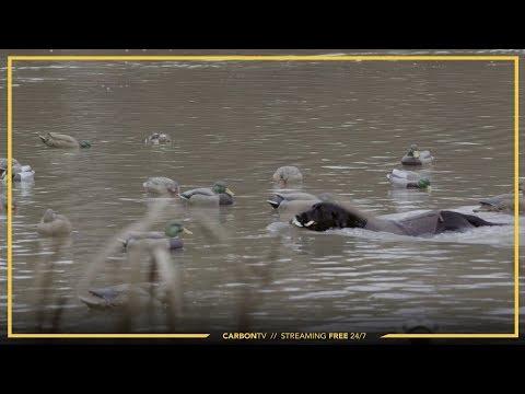 Dog Retrieval I Heartlandia: Tony Vandemore