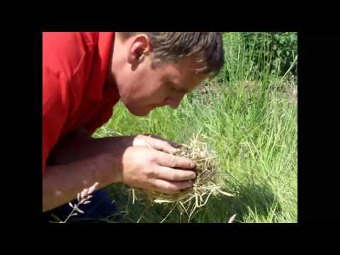 how to make fire with friction using uk hazel wood.