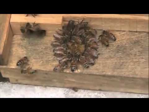 Bees Flying On December 16, 2010