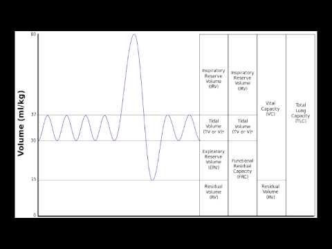 Lung Volumes & Lung Capacity