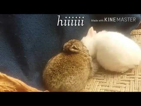 Two  cut  rabbit
