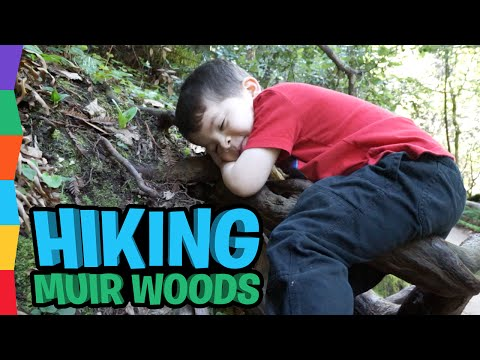 Hiking Muir Woods: Things to Do in San Francisco with Kids: Family Fun Adventure Outside by ToyRap