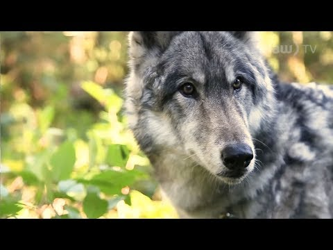 The Man Who Speaks For Wolves   Gary Allan // In A Minute (Where You Live)