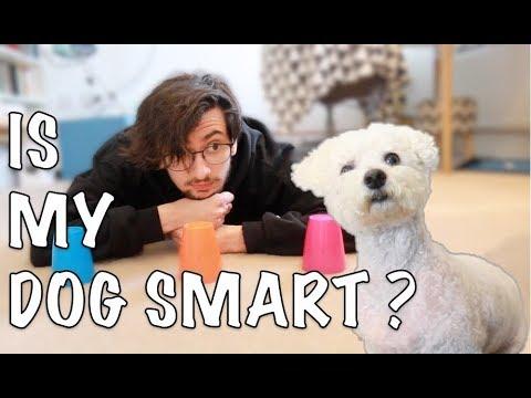 TESTING MY DOG'S INTELLIGENCE