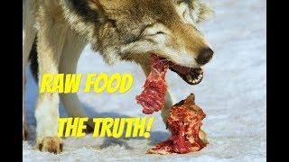 WOLF FOOD - what do I feed my Wolfdog?