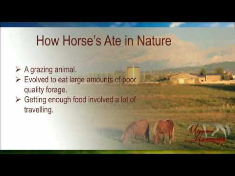 What to feed a Miniature Horse?