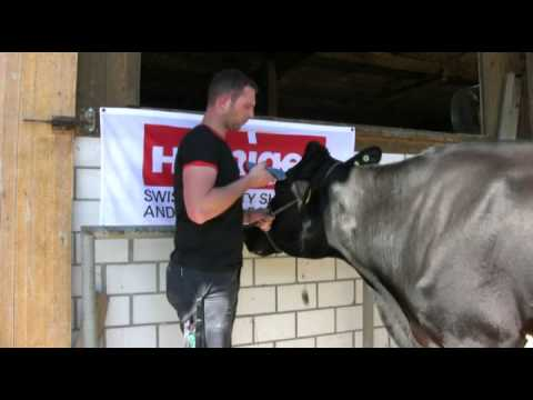 Udder and head clipping