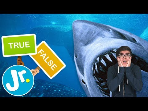 What do you know about SHARKS? - TRUE or FALSE- SHARK WEEK
