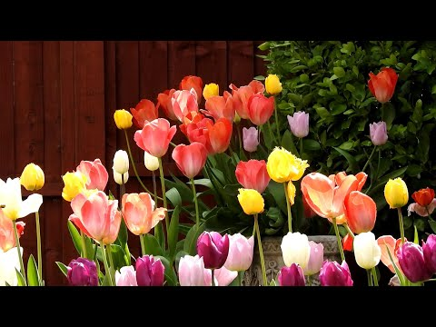 My Garden 💐🌸💮🏵️🌹🥀🌺🌻🌼🌷🌱💗