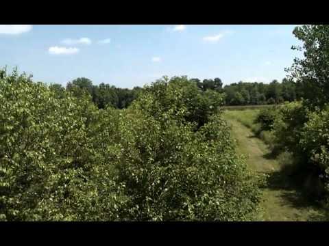 Ohio Land for sale - Pickaway 285 video 6