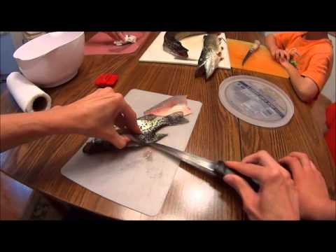 How to Clean a Panfish fish Crappie Fillet - same as sunfish bluegill Perch Fishing