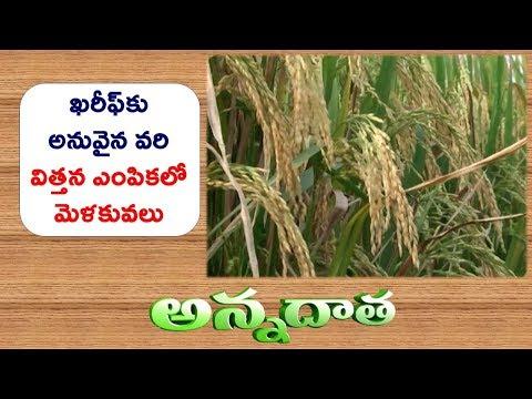Kharif Paddy Varities | to Different Parts of Andhra Pradesh || ETV Annadata