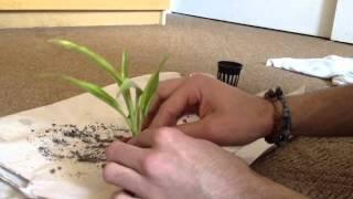 How to pot your aquarium plants