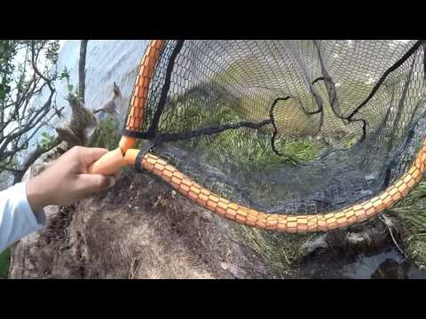 How To Catch And Rig Fiddler Crabs For Catching Redfish, Black Drum, & Sheepshead