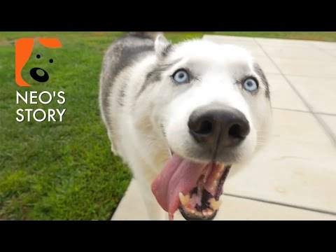 Neo's Story, the Inspiration Behind NEO-K9 [Dog Rescue]