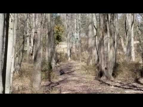 Hinge cut deer(2)
