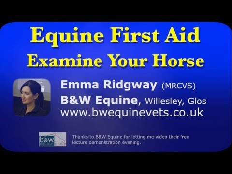 Horse First Aid - Checking Vital Signs - Pulse, Respiration, Temperature