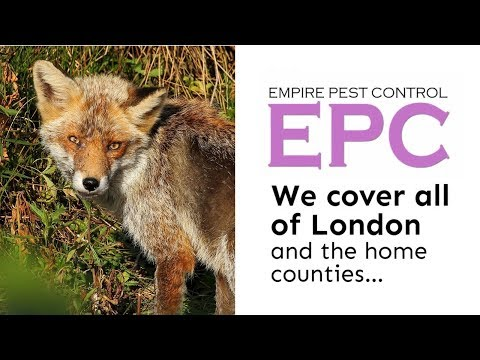 FOX CONTROL LONDON UK ~ PROOF & GET RID OF FOXES ~ EMPIRE PEST CONTROL LONDON