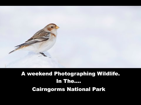 A weekend photographing wildlife in Scotland pt2: The Cairngorms National Park.