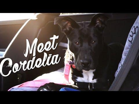 Meet Cordelia