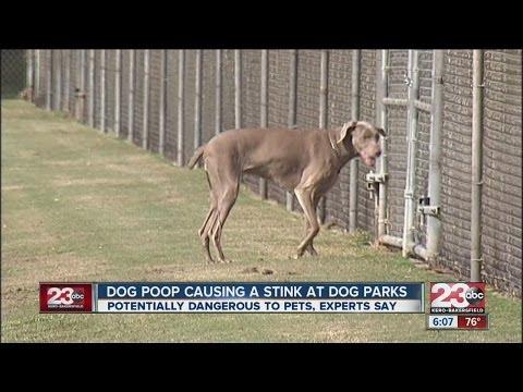 Dog poop causing a stink