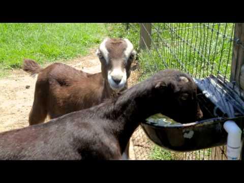 Season 2, Ep. 13: Bartlett Farm, New Orleans