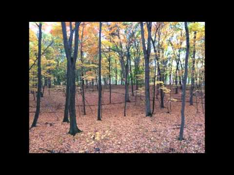 Autumn From The Treestand