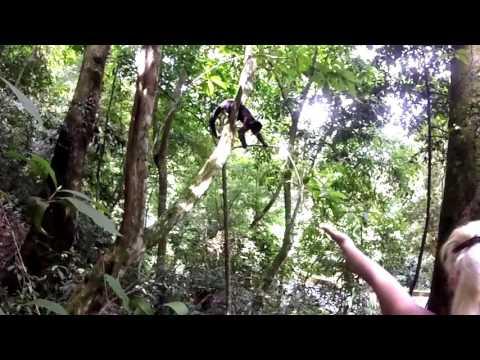 The rainforest Tijuca National Park in Rio de Janeiro