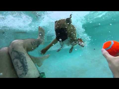 Bowser The Diving Boxer Dog - GoPro Hero3+ Silver