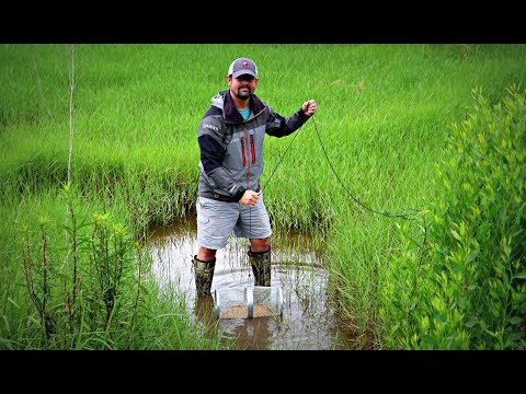 Trapping Crawfish To Feed Our 2 Pet Bass!!