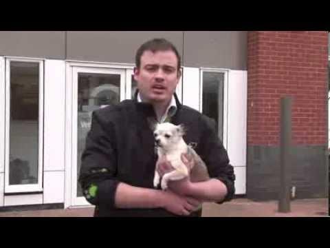 Understanding dog breeds - Chihuahua