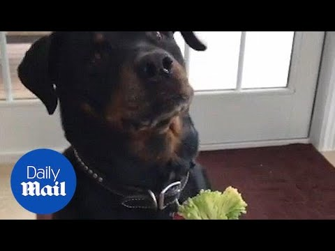 Hilarious dog refuses to eat his vegetables - Daily Mail