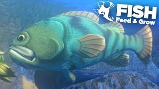 GOLIATH GROUPER!!! - Feed And Grow   Ep9