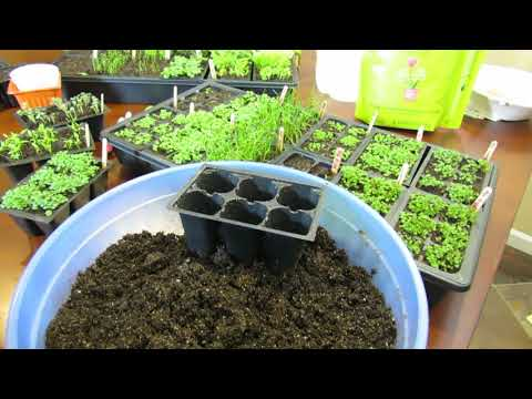 Complete Guide to Seed Starting Chives, Oregano & Thyme: Watering, Fertilizing, Cinnamon