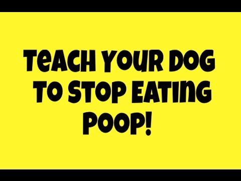 Stop Your Dog From Eating Poop