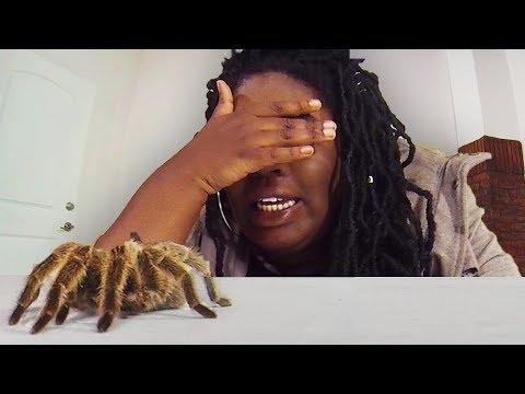 Terror Room: HUGE SPIDER